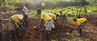 © The Movement for School-Based Agricultural Education